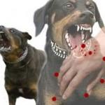 Dấu hiệu của bệnh dại ở chó và cách phòng ngừa