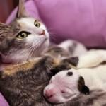 Người nuôi chó mèo có thể bị lây nhiễm giun đũa từ chó mèo lây sang