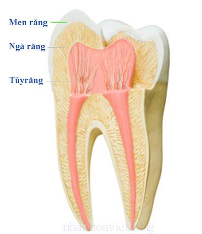 Cách điều trị tủy răng