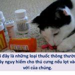 Mèo sử dụng thuốc của người sẽ gặp nguy hiểm tới tính mạng