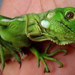Cách nuôi Rồng Nam Mỹ màu xanh lá cây mới nhất